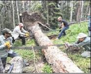 Ouray Trail Group volunteers and U.S. Forest Service employees use a crosscut saw to clear a downed tree in the Uncompahgre Wilderness last weekend. Photo courtesy Lisa Hickman/OTG