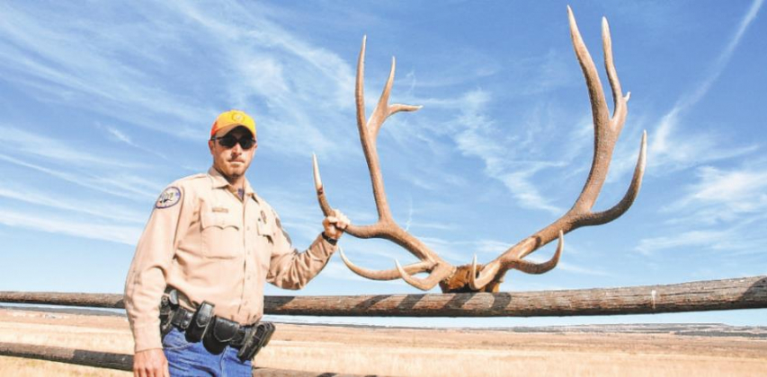 Elk hunting tips from experts