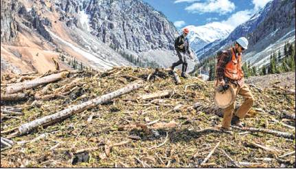 Two student researchers were sent with chainsaws to a debris field above Silverton, Colorado, to collect tree-ring specimens for dendrochronologists looking for data about the avalanche cycle in Colorado. Photo courtesy The Colorado Sun/Nina Riggio