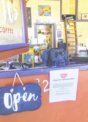 Mojo's Coffee, Chai and Teas mascot Kali waits for customers who can be served out the Dutch door at the Ouray business. Restaurants in Ouray County have been forced to adjust how they operate since they cant provide dine-in services. Erin McIntyre —Ouray County Plaindealer